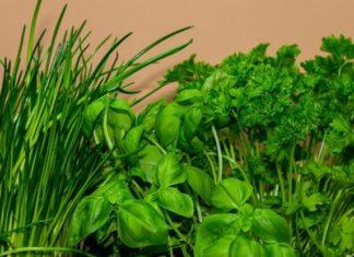 Jak suszyć i przechowywać zioła?